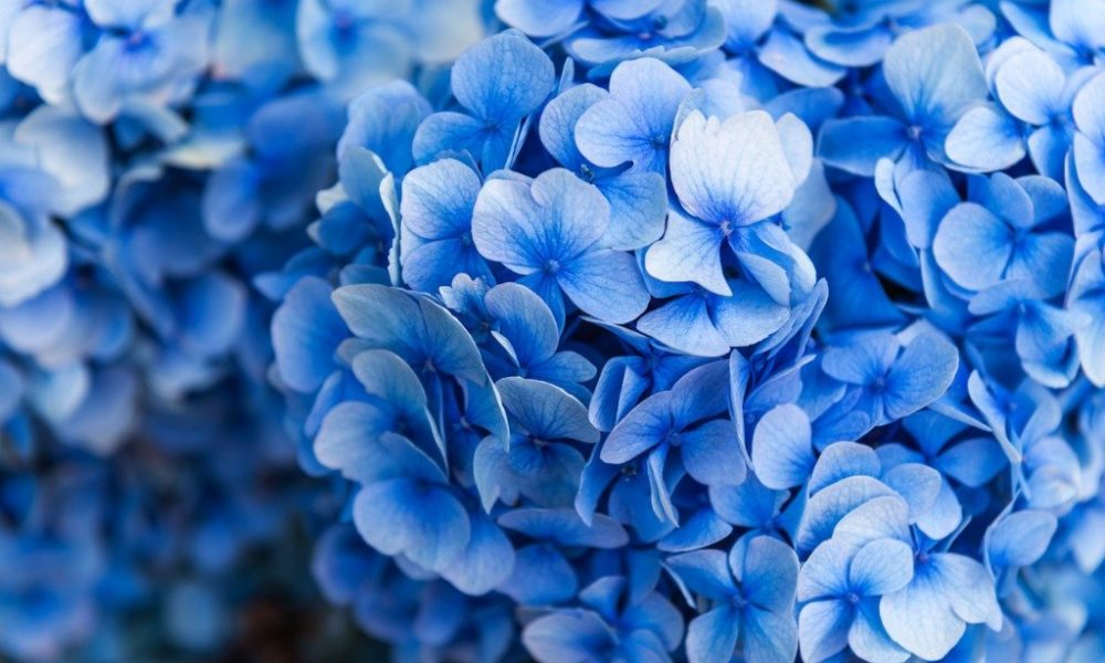 12 Gorgeous But Deadly Flowers